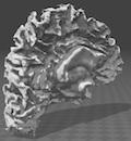 ヒトの脳から心を計算する
